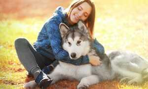Подработка Догситтером (няня для собак)