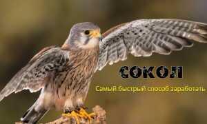 Обзор курса Сокол Андрея Копылова
